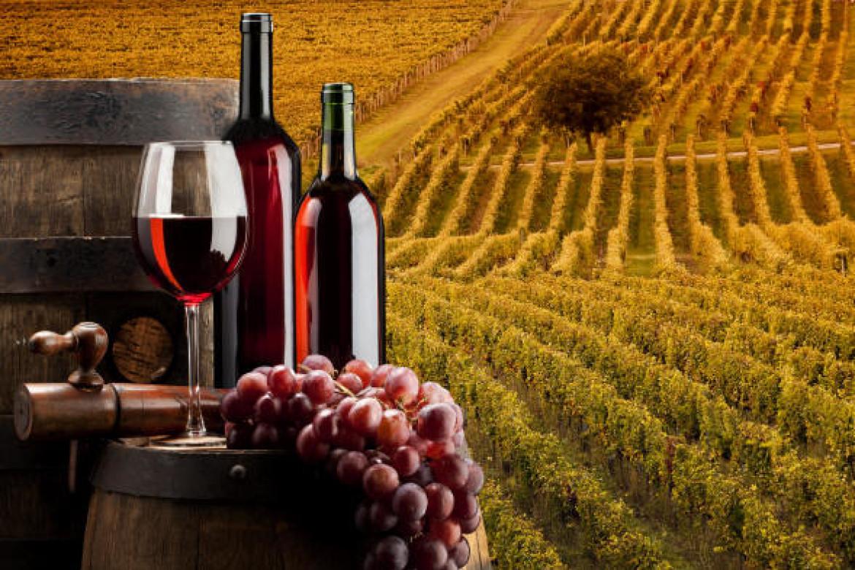 Vino: registrati 10 nuovi vitigni resistenti alle malattie